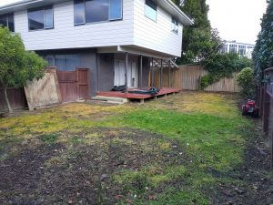 ready lawn lower hutt before image