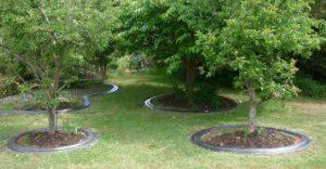 mower edge around trees